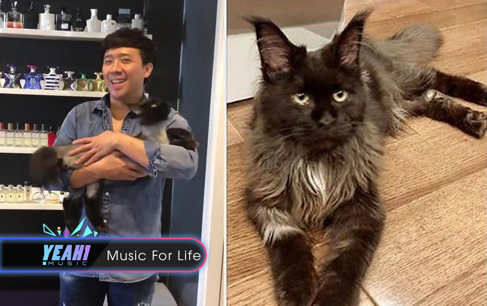 Trấn Thành nói về mèo cưng 70 triệu, vô tình làm lộ bí mật gia đình