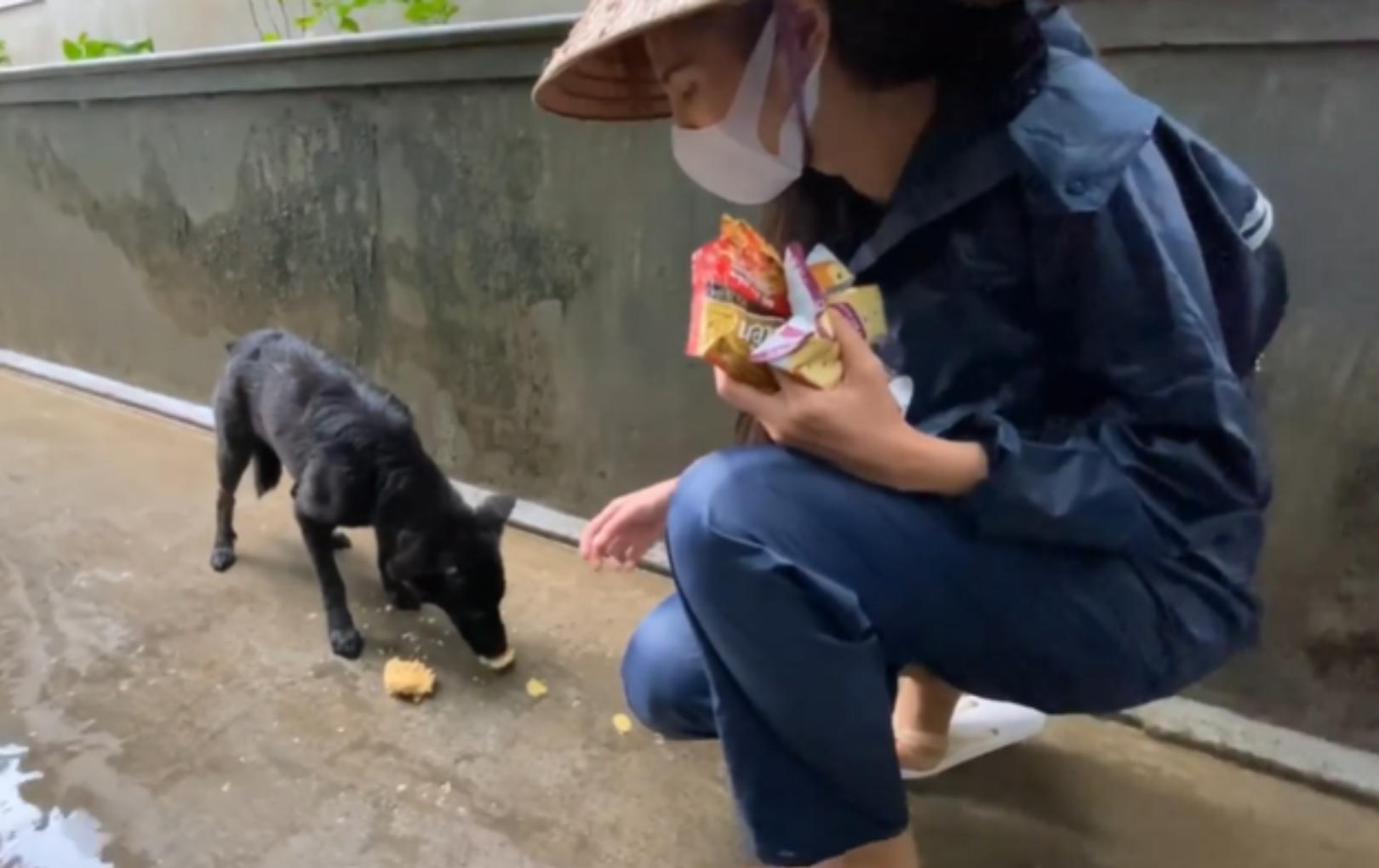 Tan chảy trước khoảnh khắc Thủy Tiên cho một chú chó ăn trên đường đi cứu trợ miền Trung