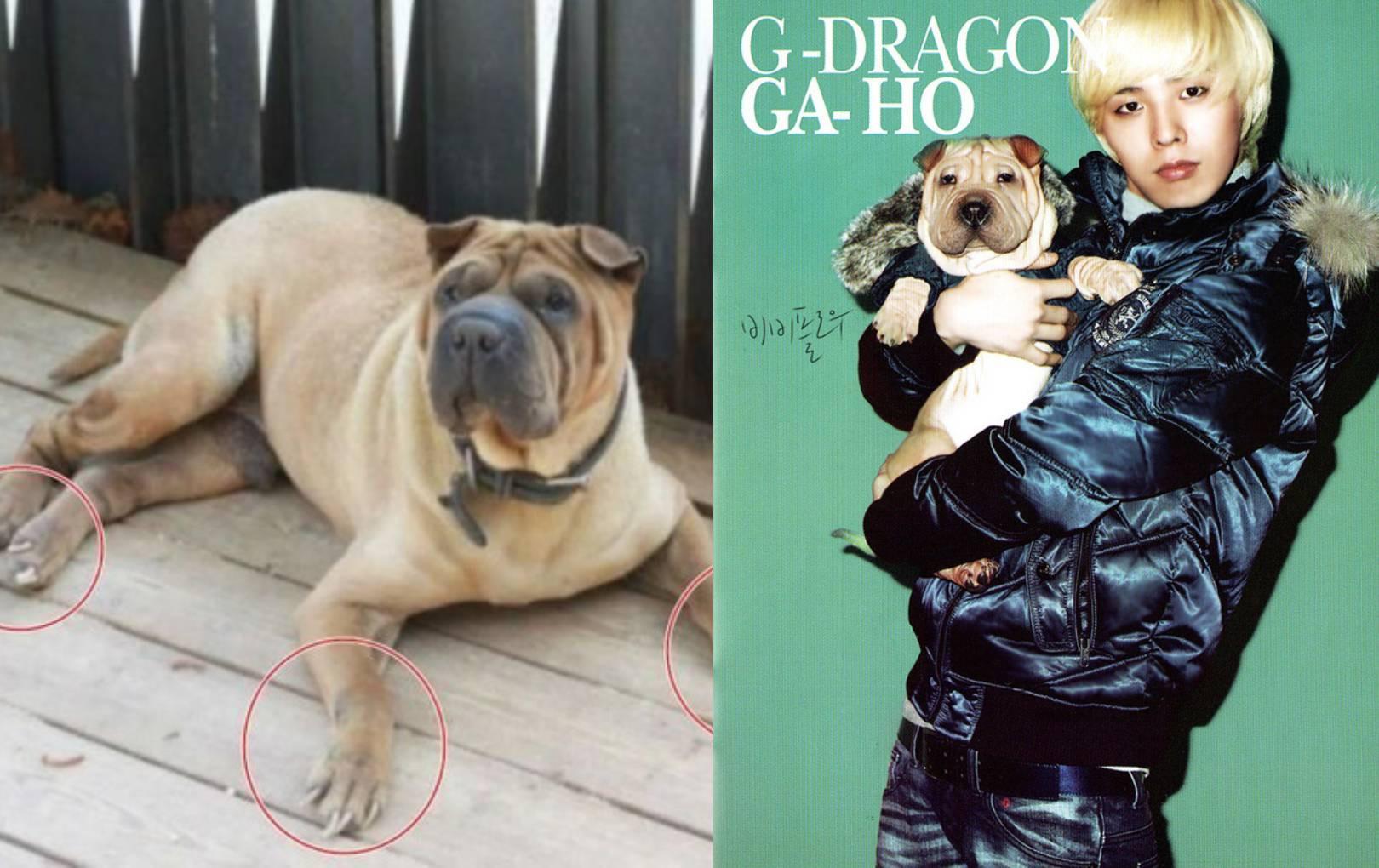 G-Dragon bị chỉ trích vì bỏ bê thú cưng, chuyện tưởng nhỏ nhưng gây tranh cãi gay gắt
