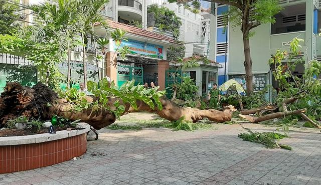 Ốc Thanh Vân cùng dàn sao Việt nghẹn ngào trước vụ việc cây phượng bật gốc đè 18 học sinh