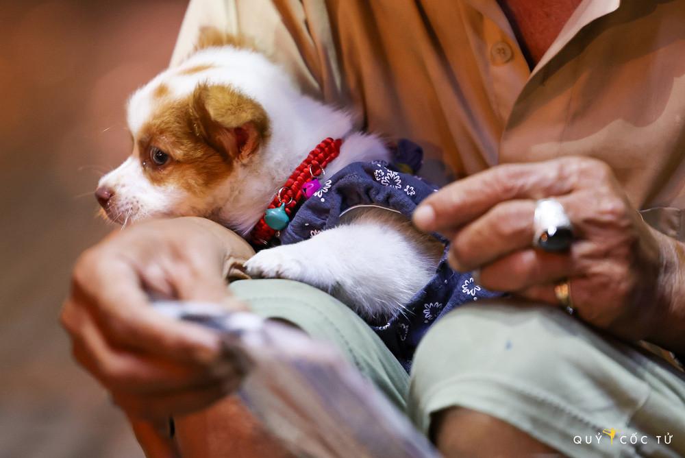Chú cún nổi tiếng của cụ ông bán vé số câm điếc qua đời: Xót thương số phận bơ vơ người ở lại